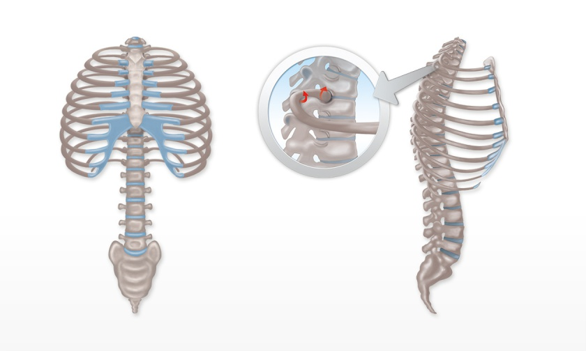 Wirbelsäule und Brustkorb - Atemmuskeltraining